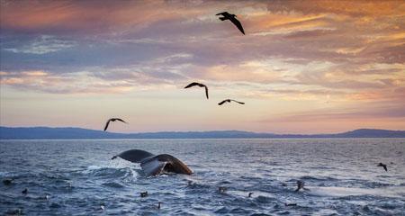 Did God Create Birds and Sea Mammals But Not Land Mammals?