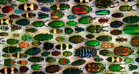 If There Is a God, Why So Many Beetles?