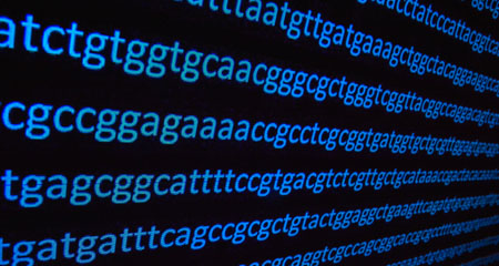 New Insights into Genetic Code Optimization Signal Creator's Handiwork